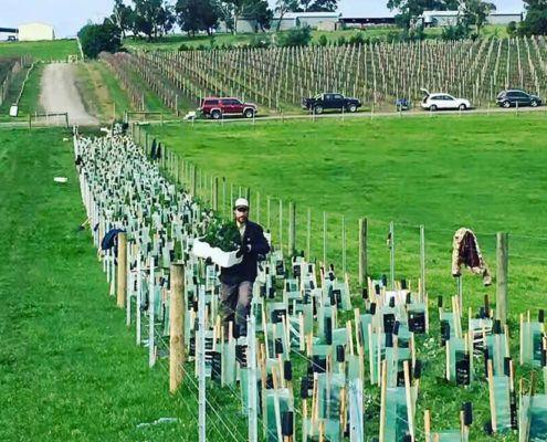 Tree Planting at Helen & Joey Estate