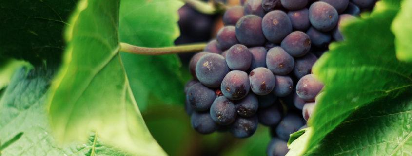 Vine-Time