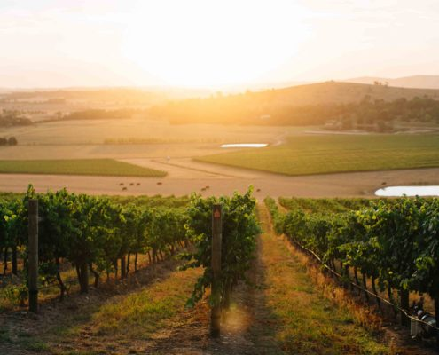 HJ-Vineyard-Sunset-HRW
